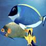 icon Happy Fish 3D