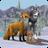 icon WildCraft 2.2e