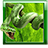 icon Snake Live Wallpaper 1.14