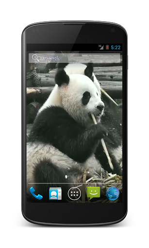 Panda Free Video Wallpaper