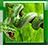 icon Snake Live Wallpaper 1.7