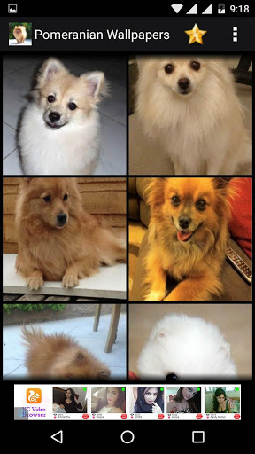 Pomeranian Dog Hd Wallpapers For Iball Slide 3g Q45i Free Download
