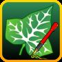 icon Ivy Draw