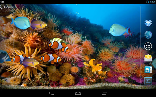 Tropical fishes aquarium