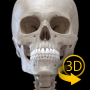 icon Skeleton | 3D Anatomy