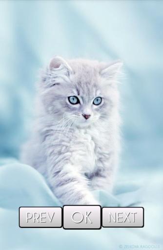Cute Cat Wallpaper Hd For Samsung Galaxy J2 Pro Free Download Apk File For Galaxy J2 Pro